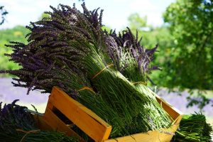 lavender-1595608_1920-2