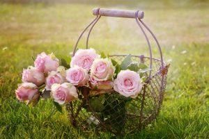 roses-1566792_1920-2